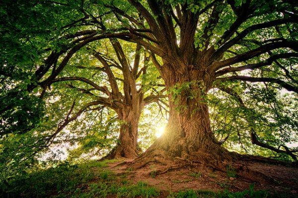 スピリチュアルな世界 森の光